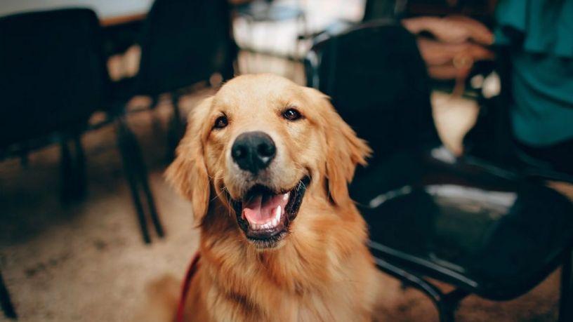 Las mejores marcas de comida para perro