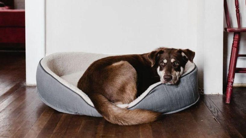 Los detalles de una buena cama para perro