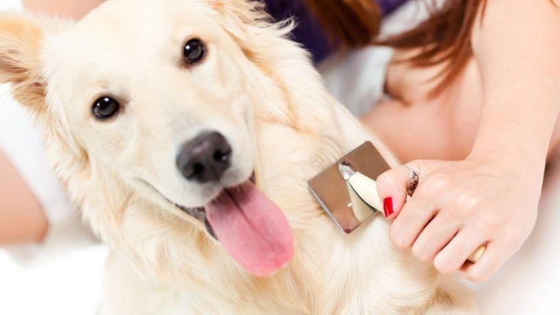 Cuál cepillo usar para tu perro según su pelo