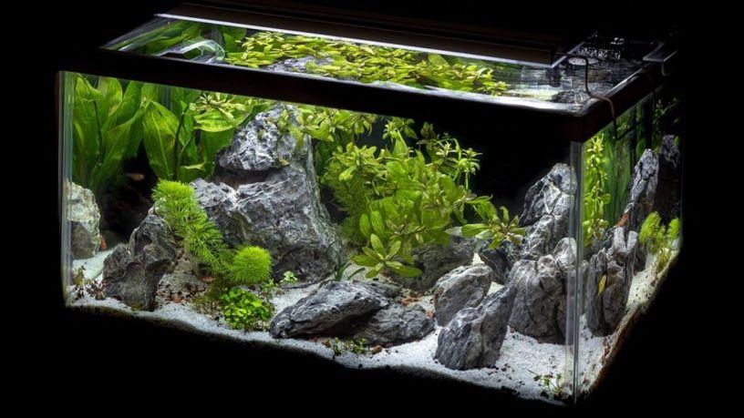 Filtros para acuario, elige el mejor para tus peces