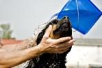¿Puedo usar shampoo de humano con mi perro?