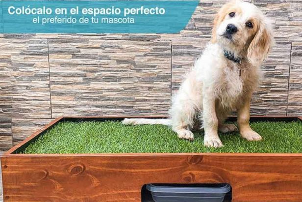 perro usando tapete entrenador - claro shop