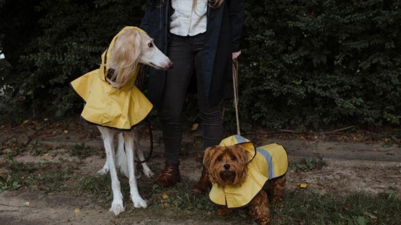 5 ventajas de los impermeables para perro