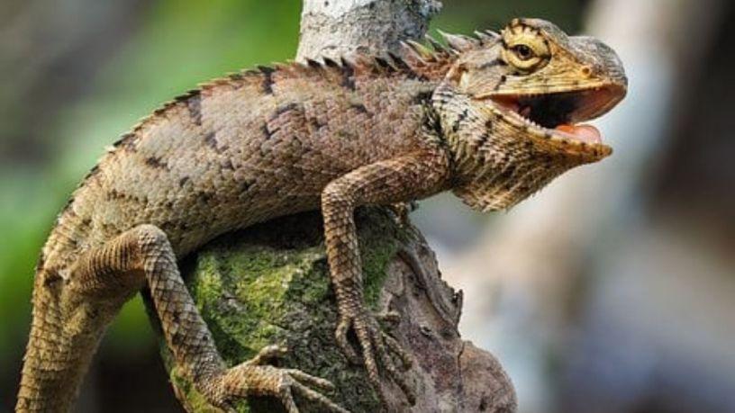 ¿Sabes cuidar de una iguana?