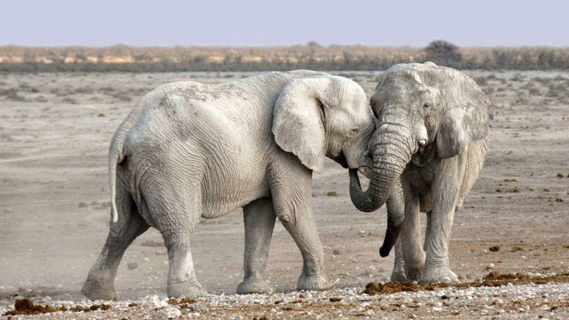 9 datos sorprendentes sobre los elefantes