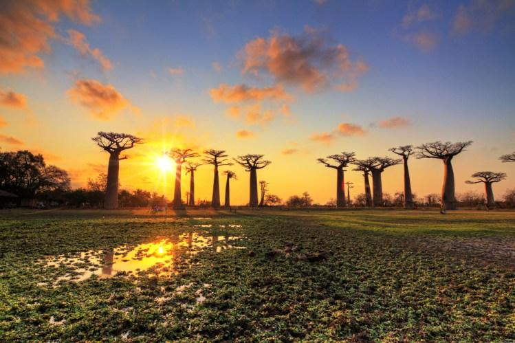 Baobab panorama sunset