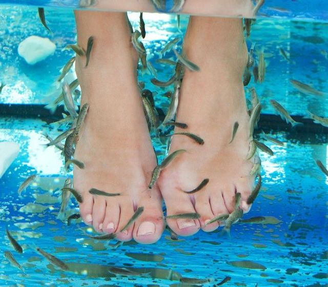 fish_pedicure_