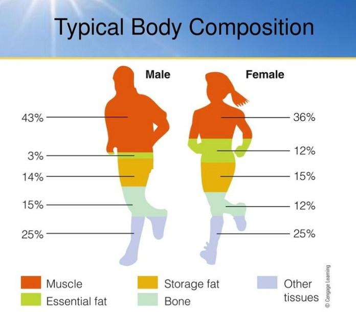 cliomakeup-peso-ideale-7-1-composizione-corporea.jpg