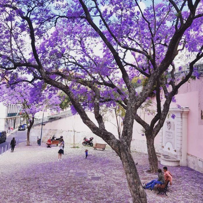 viaggi low cost Portogallo: Lisbona