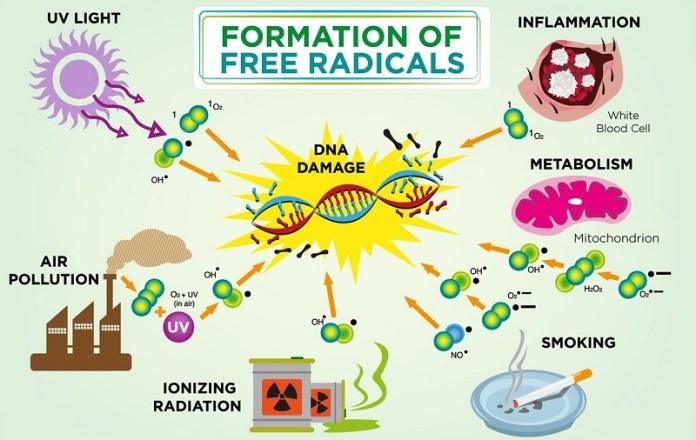 cliomakeup-la-frutta-fa-ingrassare-8-radicali-liberi