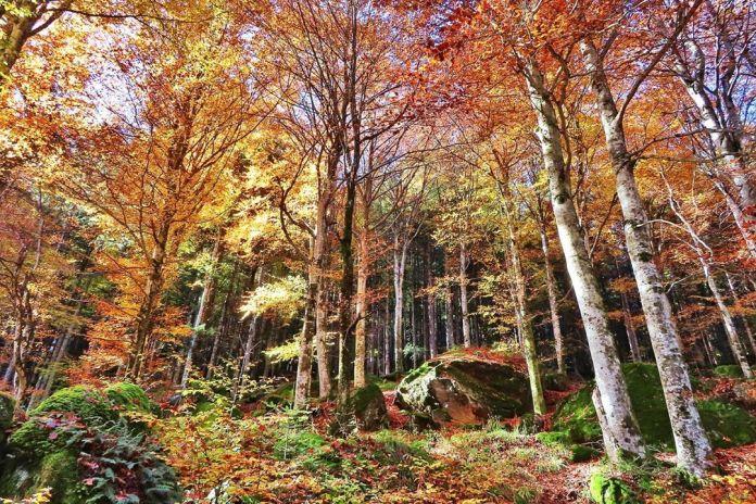 cliomakeup-viaggi-italia-autunno-10-foresta-bagni-masino