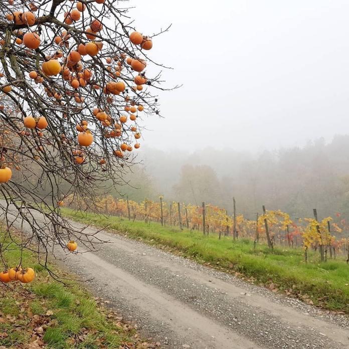 cliomakeup-viaggi-italia-autunno-2-colli-piacentini