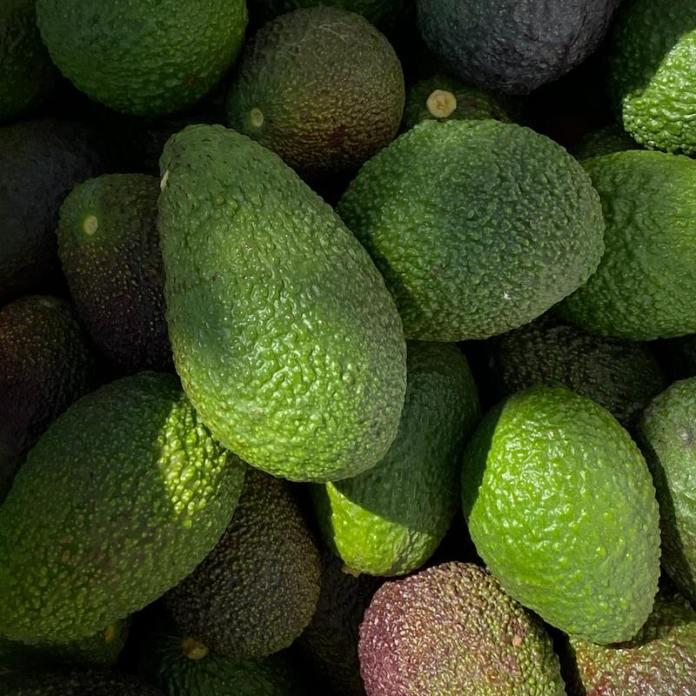 cliomakeup-avocado-frutto-esotico
