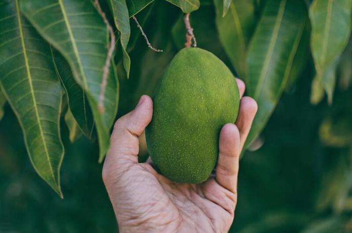 cliomakeup-mango-frutto