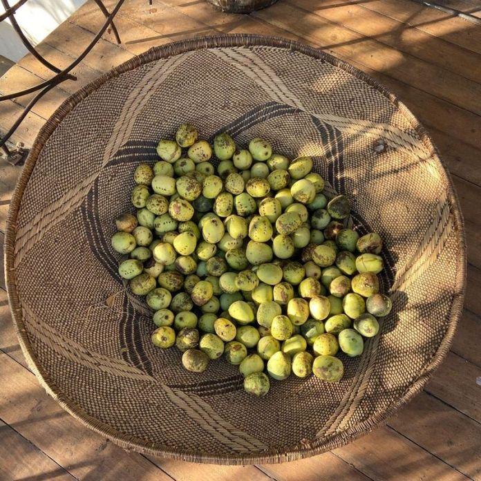 cliomakeup-olio-di-marula-elisir-frutto