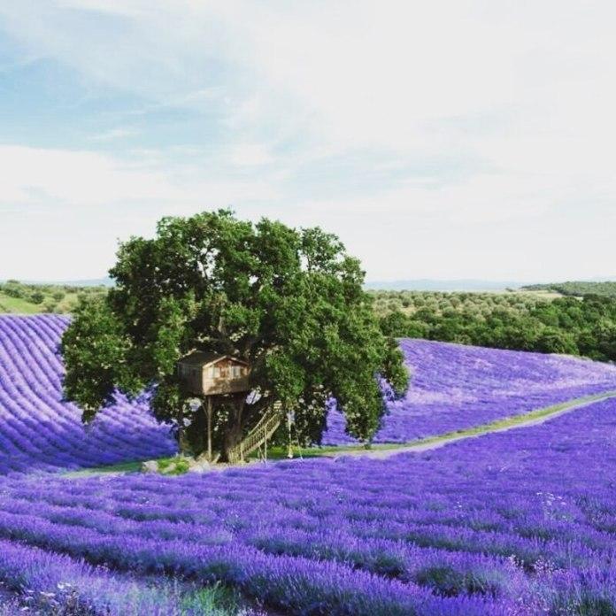 cliomakeup-glamping-in-italia-casa-albero-suite-bleue-lavanda