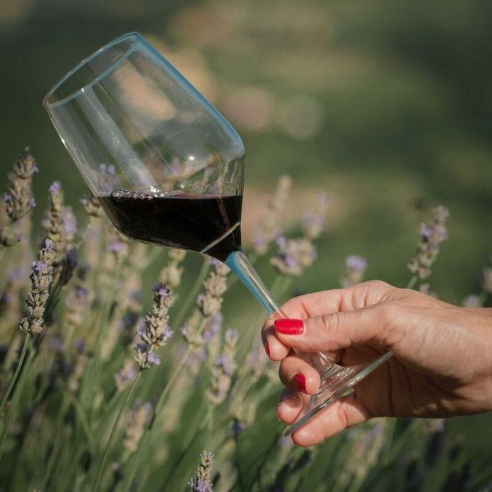 cliomakeup-viaggi-in-camper-vino-langhe