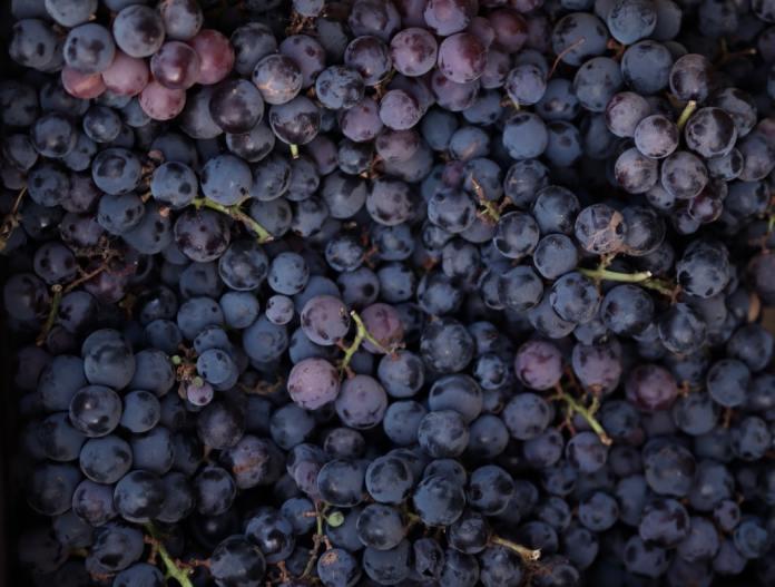 cliomakeup-colore-capelli-viola-grape-autunno-2021-18