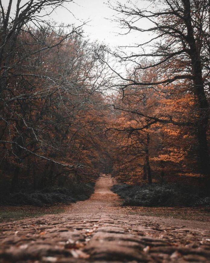 cliomakeup-passeggiate-castagne-bambini-bosco-di-manziana