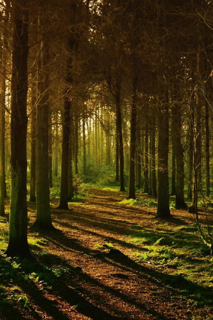 cliomakeup-passeggiate-castagne-bambini-nei-boschi