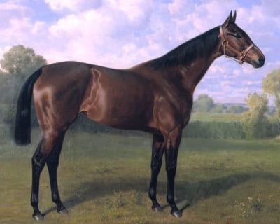 English Thoroughbred Horse