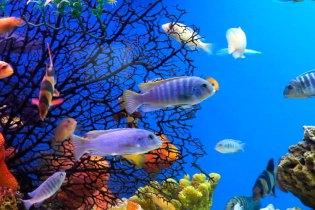 A beleza do AquaRio, RJ