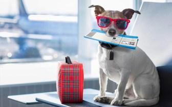 Vai viajar e levar seu pet? Veja as regras para transportar animais em voos