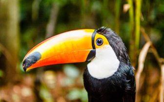 Conheça o Parque das Aves em Foz do Iguaçu