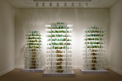 Forest Glass, Katherine Gray (Canadian, b. 1965), United States, CA, Los Angeles, 2009. 2010.4.49