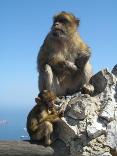 Monkey at the top of The Rock of Gibraltar