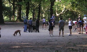 1024px-Dog_walkers_Central_Park_-8403813880-.jpg