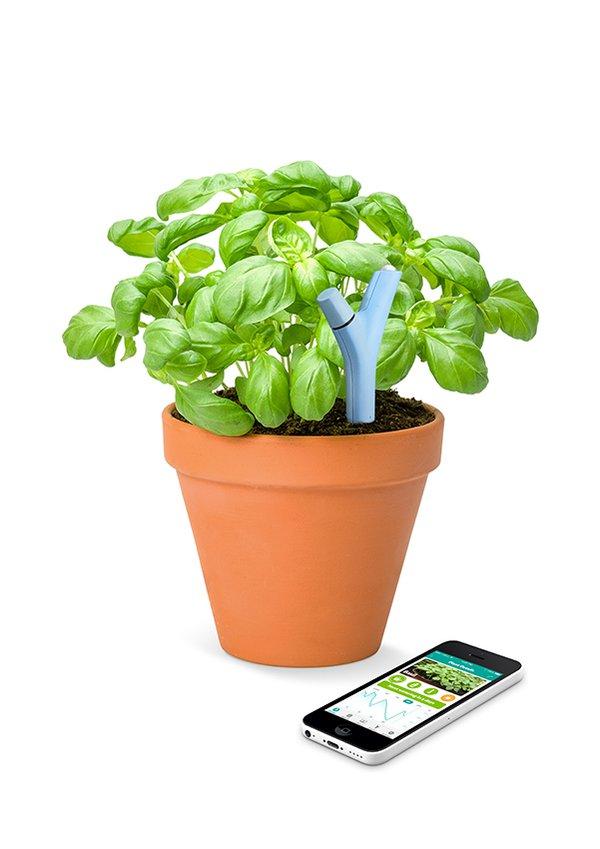 FlowerPower_Insitu_Basil_Blue_With_Smartphone.jpg.600x2000_q85