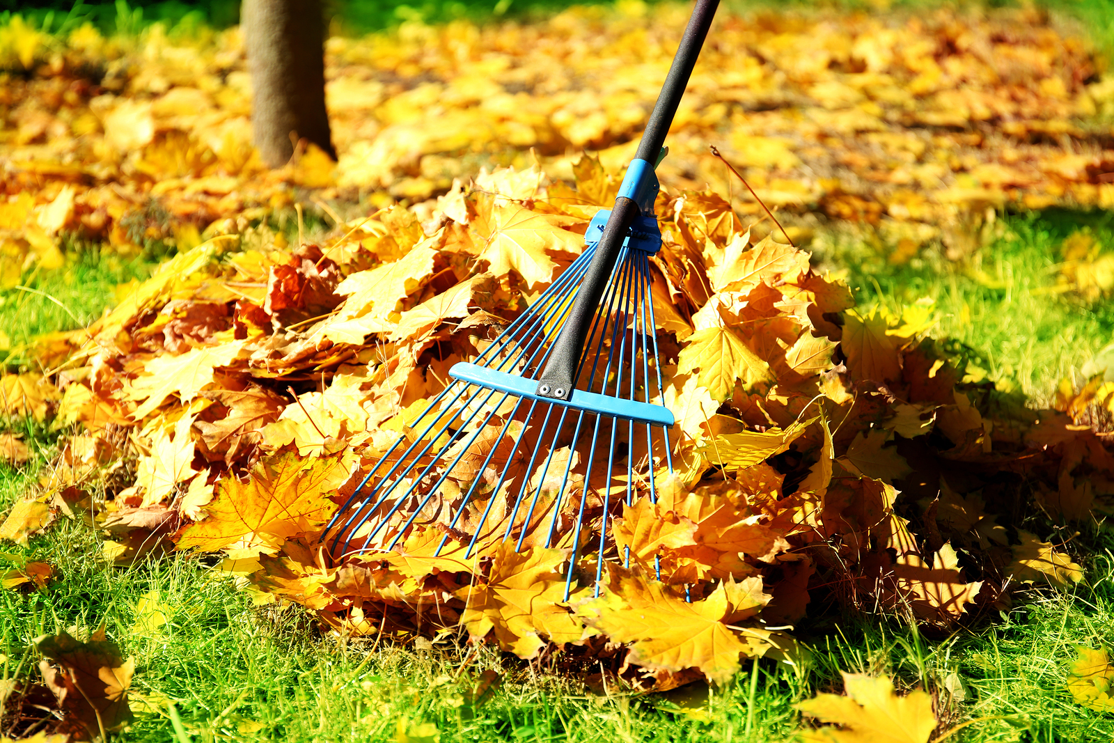 Raking Leaves Necessary