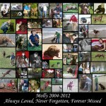Collage of the Week 9-20-2012