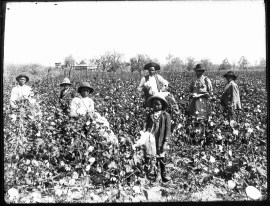 Black_cotton_farming_family