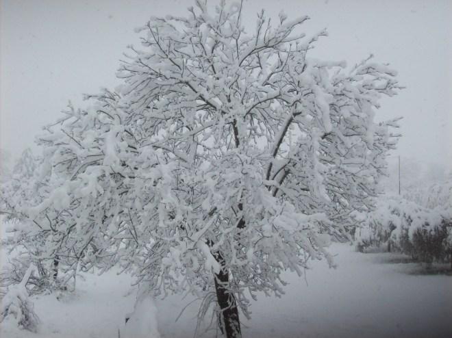 nevicata 18-01-13 006 x fb