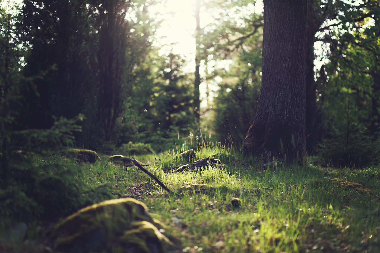 wood-nature-sunny-forest_feature