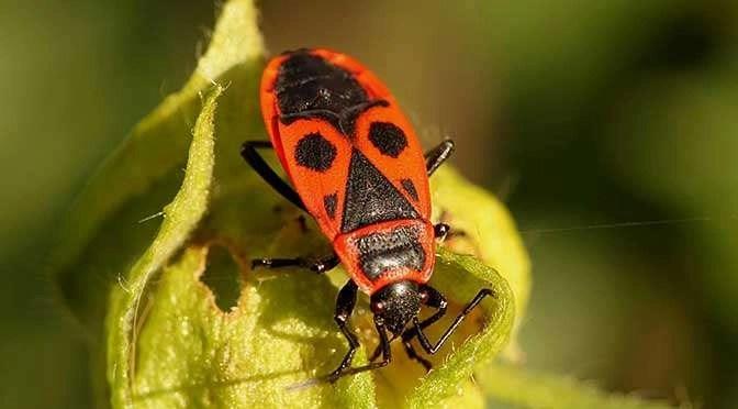 Ernstig lek in FaceTime (bron afbeelding: https://pixabay.com/nl/kever-bug-brand-bug-insect-460157/)