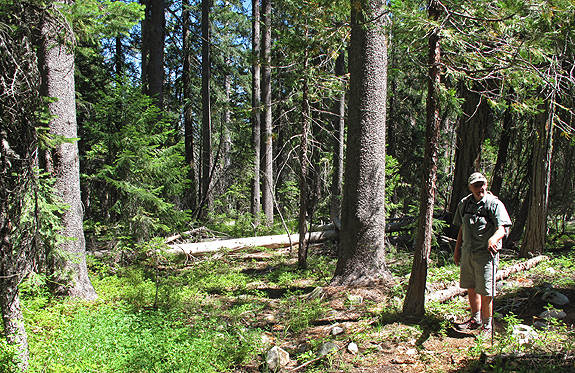 John Sawyer stands in an enriched montane conifer forest along Sugar Creek. Here we counted 10 conifers. Eleven conifers species in one place have been documented in the upper reaches of nearby Horse Range Creek6.