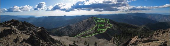 foxtail-grove
