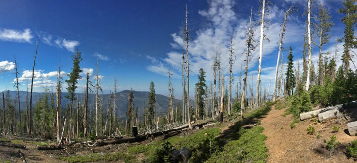 A high intesity burn from 2008 has opened up small pockets in the Shasta fir - western white pine forests.