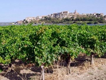 Les vins de la méditerranée issus du plus grand vignoble du monde ont le vent en poupe à l'export