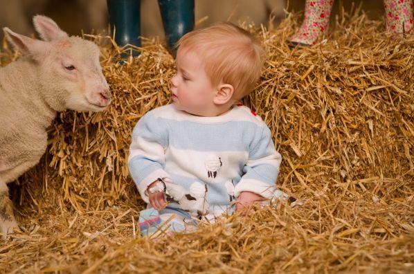 Little Cub  Florrie meets the lambs at Roves Farm