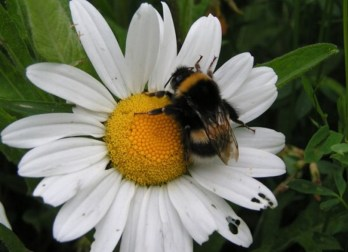 5 Ideas for a Bee Friendly Garden   Cotswold Baby Co