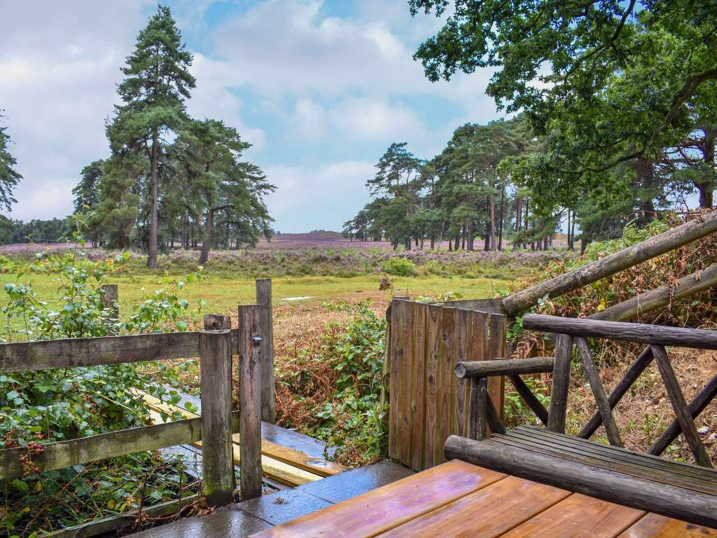 yoga break in the New Forest