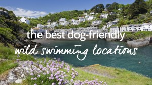 wild swimming with dogs