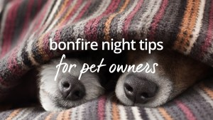 Bonfire night tips pet owners
