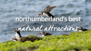 Wild attractions Northumberland