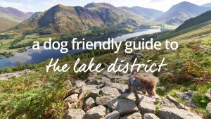 Dog friendly holidays Lake District