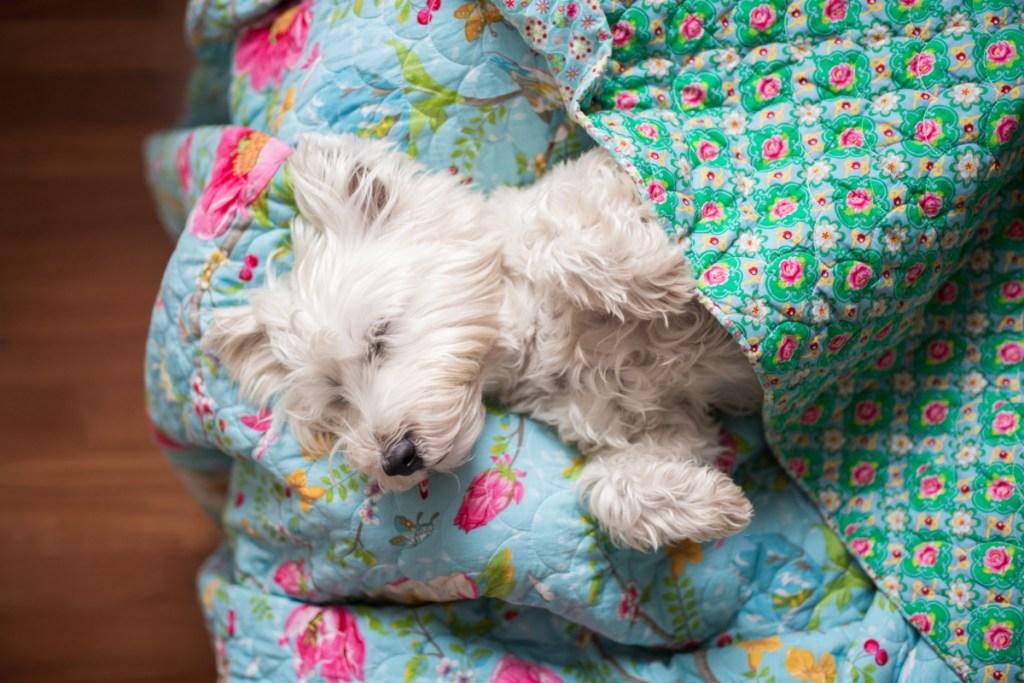 Dog friendly Xmas escape